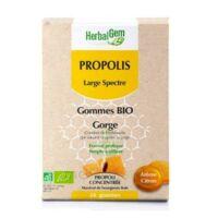 Herbalgem Propolis large spectre Gomme bio B/24 à VINCENNES